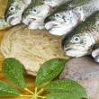 Wild Trout — Stock Photo