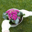 Flower Tending - Stock Photo