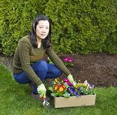 Flower Planting — Stock Photo
