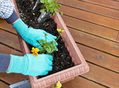 Flower Time for Back Patio — Stock Photo