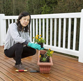 Planting Flowers for the Patio — Stock Photo