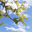 Tree branches over sky background — Stock Photo