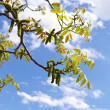 Stock Photo: Tree branches over sky background