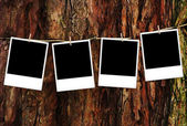 Empty photo frames over wood background — Stock Photo