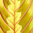 Red leaf — Stock Photo #10059480