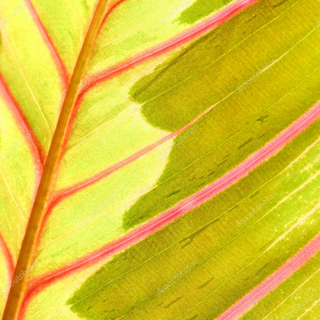 Red leaf macro close up — Stock Photo #10059482