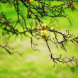 Branches — Stock Photo #10097319