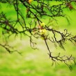 Stock Photo: Branches