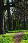 Frühlingspark — Stockfoto