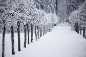 Зимние елки — Стоковое фото
