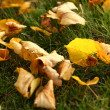 Stock Photo: Leaves on grass