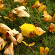 Leaves on grass - Stok fotoraf