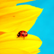Stock Photo: Ladybug on sunflower