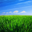 Stock Photo: Green grass fild