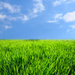 Green grass landscape — Stock Photo #10644021