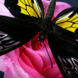 Butterfly and flower - Foto Stock