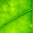 Green leaf — Stock Photo #10644571