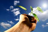 Hand plant — Stock Photo