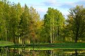 Lake reflect nature landscape — Stock Photo