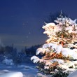 Winter pine tree - Stock Photo