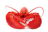 Isolated lobster — Stock Photo