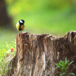 Chickadee sitting on a stump - Stock Photo