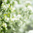 White summer flowers - Stock Photo