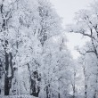 Winter trees — Stock Photo