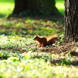 Squirrel in the autumn forest — 图库照片 #8695010