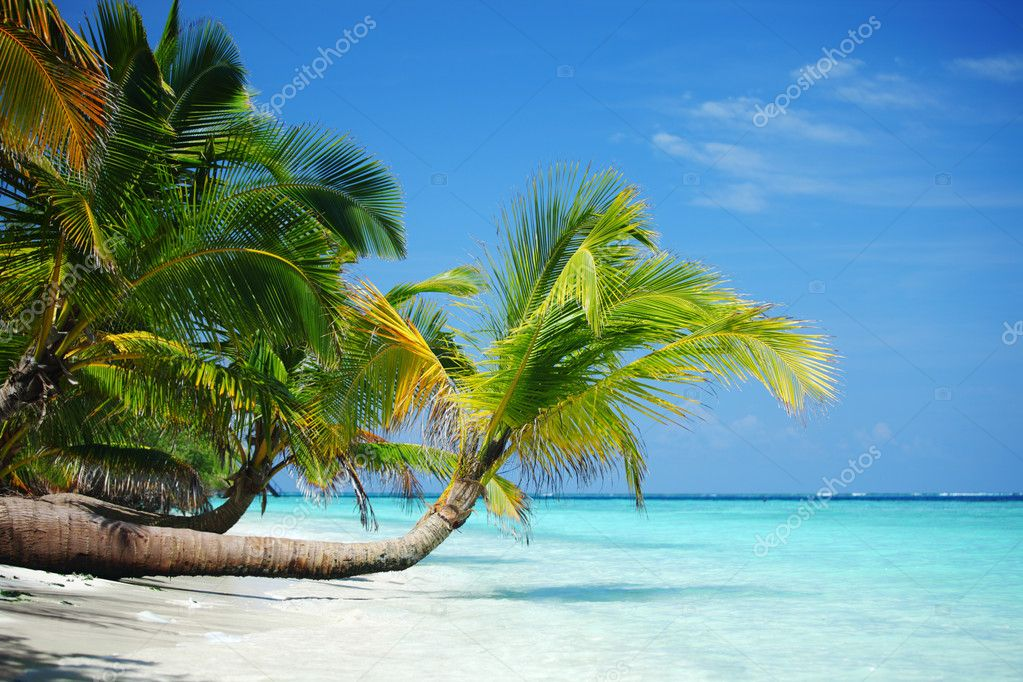 Tropical island palm sea and sky — Stock Photo #8708416