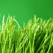 Grass nature background — Stock Photo