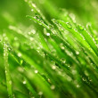 Grass nature background — Stock Photo #8925772