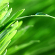 Grass nature background — Stock Photo #8925806