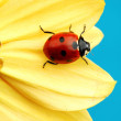 Ladybug on sunflower — Stock Photo #8941890