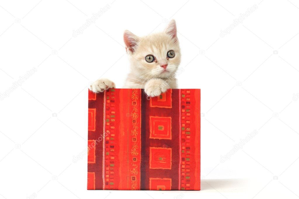 Cat in gift box isolated on white background — Stock Photo #8941505