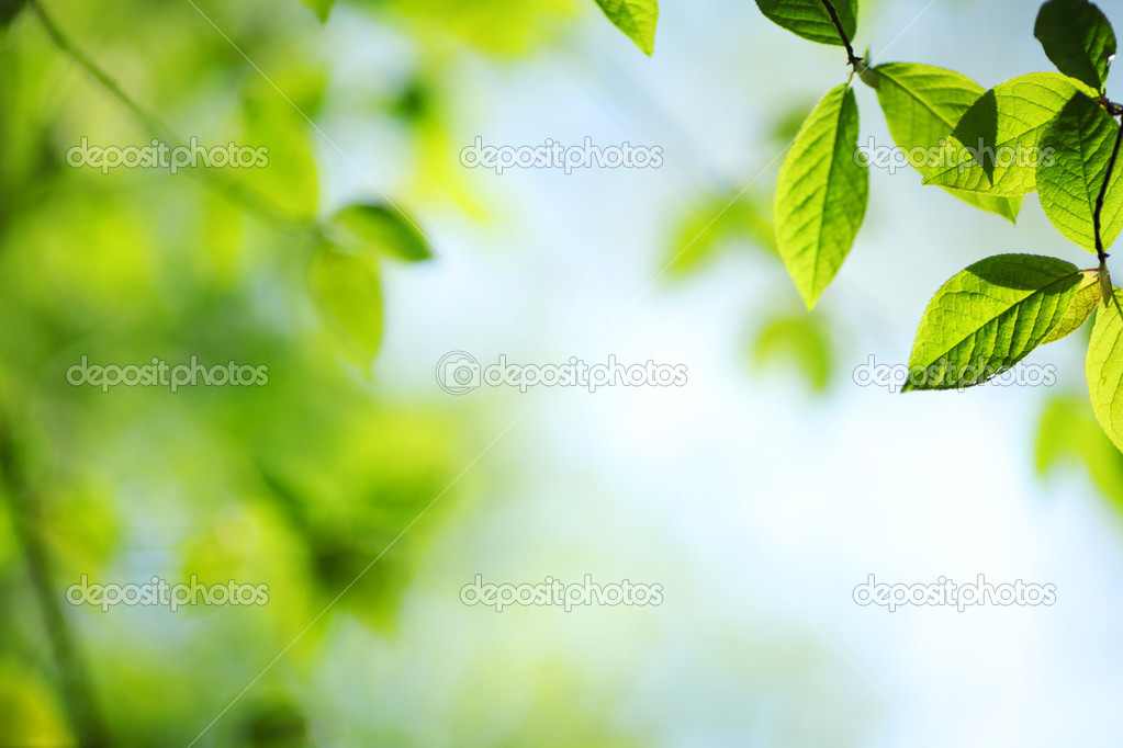 Green leaves macro close up — Stock Photo #8974880
