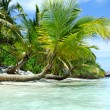 Tropical island — Stock Photo #9030388