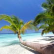Tropical island — Stock Photo #9030389