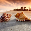 Shell — Stock Photo #9053614