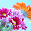 Colourful summer flowers - Foto de Stock