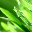Grass nature background — Stock Photo #9053679