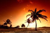 Sunrise palm — Stockfoto
