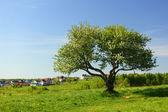Alone tree — Stock Photo
