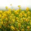 Yellow spring flowers — Stock Photo #9148261
