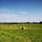 Hay on field — Stock Photo