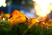 Goldener herbst — Stockfoto