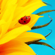 Ladybug on sunflower — Stock Photo #9253185
