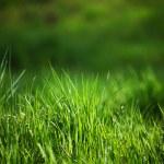 Green grass — Stock Photo #9267749