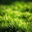 Green grass — Stock Photo #9267752
