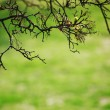 Branches — Stock Photo #9267976